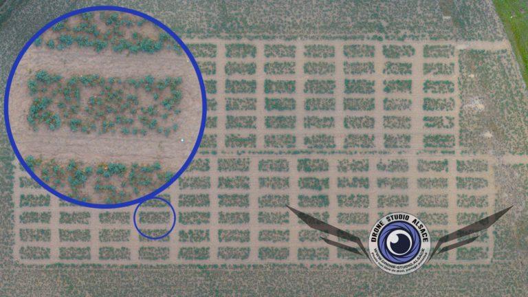 Avantages de l'utilisation de drone pour le BTP et agriculture en Alsace