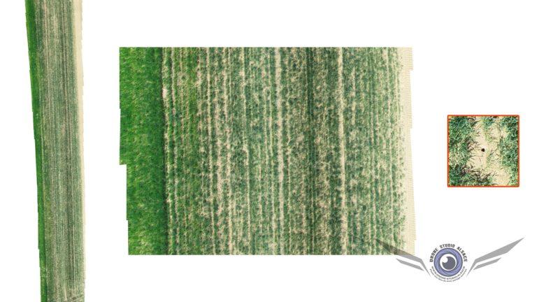Photogrammétrie par drone pour l'agriculture